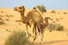 Les 7 Perles des Emirats + Extension Abu Dhabi