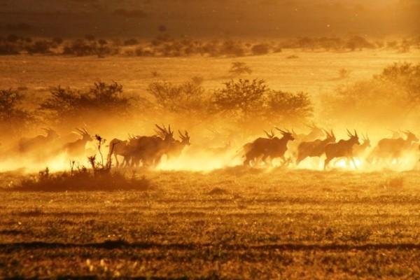 Les Inévitables de l'Afrique du Sud Circuit Les Inévitables de l'Afrique du Sud3* Johannesbourg Afrique Du Sud