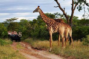 Afrique Du Sud-Johannesbourg, Circuit Impressions d'Afrique du Sud + Chobe + Extensions aux Chutes Victoria