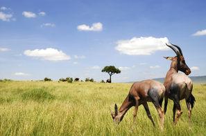 Afrique Du Sud-Le Cap, Circuit Afrique du sud en VO et Hwange et Chutes Victoria