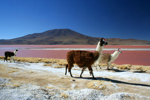 Chili-Santiago, Circuit Les incontournables du Chili