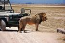 Kenya - Nairobi, Safari Jambo et Extensions balnéaires