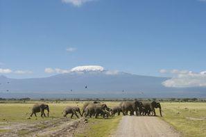 Kenya-Nairobi, Circuit Safari Jambo