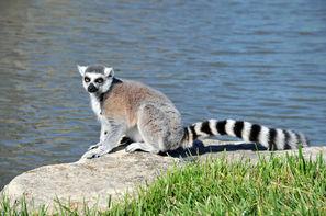 Madagascar-Antananarivo, Circuit Par la mythique route du sud