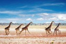 Namibie - Windhoek, CIRCUIT IMPRESSIONS DE NAMIBIE