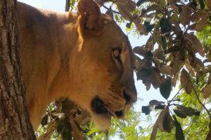 Senegal-Dakar, Circuit Lion de Fathala 3*