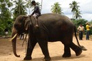 Merveilles du Sri Lanka