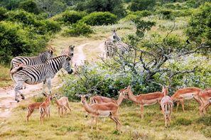 """Tanzanie-Arusha, Circuit Safari """"Magie de la Tanzanie"""""""
