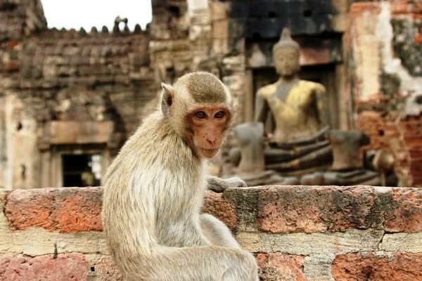Singe temple lobpuri Circuit Trésors du Siam 3* et Farniente à Phuket au Novotel Vintage4* Bangkok Thailande