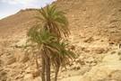 Escapade Mer et Desert