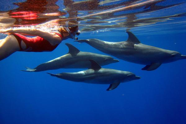 Nage avec les dauphins - Découverte Dauphins - 1ère catégorie Croisière Découverte Dauphins - 1ère catégorie Hurghada Egypte
