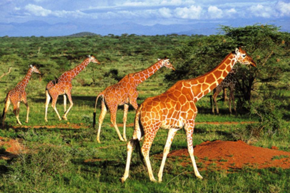 Autotour Couleurs d'Afrique du Sud Johannesbourg Afrique Du Sud