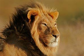 Autotour Johannesburg et le parc Kruger