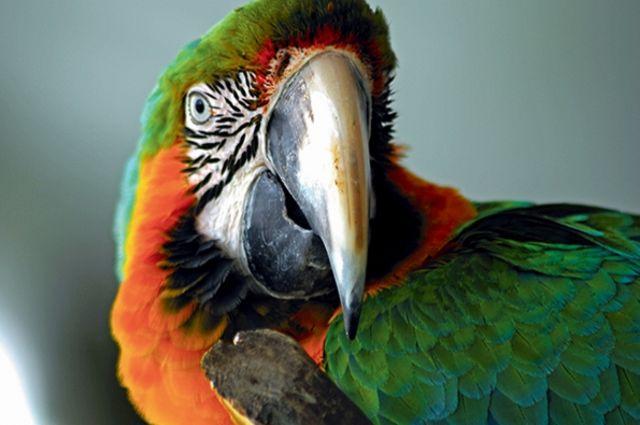 Costa Rica : Autotour Costa Rica Pura Vida