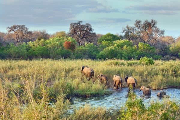 Vente flash Afrique Du Sud Circuit Safari Dream
