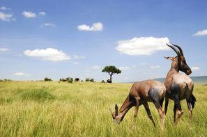 Afrique Du Sud-Le Cap, Circuit FRAM Paysages Sud-Africains + extension aux Chutes Victoria