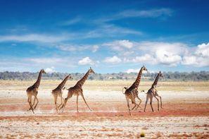 Afrique Du Sud-Le Cap, Circuit Magie de l'Afrique du Sud, Chutes Victoria et Parc Chobe