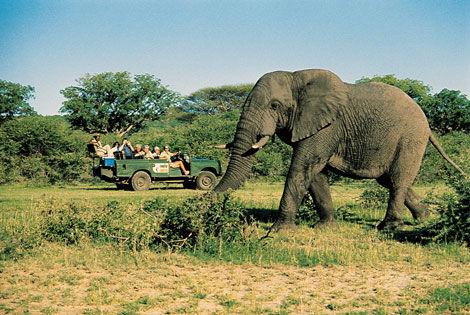 Elephant Circuit Lumières d'Afrique du Sud Le Cap Afrique Du Sud