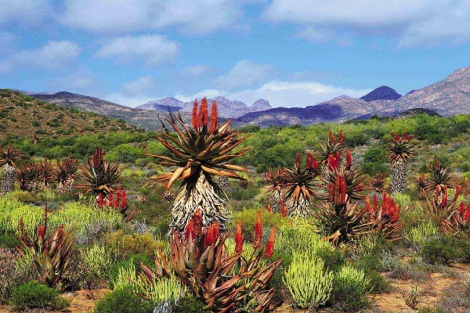 Circuit Les incontournables de l'Afrique du Sud avec Victoria falls Johannesbourg Afrique Du Sud