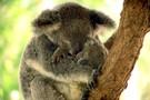 Australie - Melbourne, PRE-VOYAGE MELBOURBE & SPLENDEURS D'AUSTRALIE