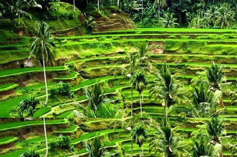 Bali-Denpasar, Circuit Les Merveilles de Bali 4*