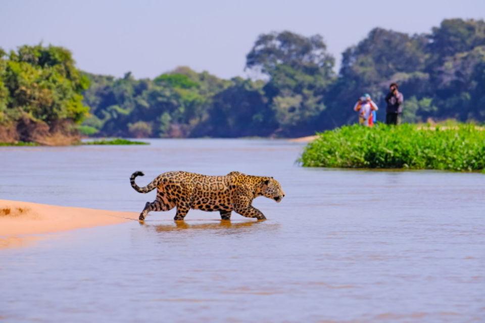 Circuit Pré-voyage Pantanal et Merveilles du Brésil Campo Grande Bresil