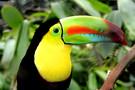 Splendeurs du Brésil & Extension Amazonie