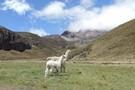 Equateur - Quito, CIRCUIT DECOUVERTE DE L'EQUATEUR