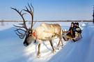 Splendeurs de Laponie à l'hôtel Sirkantähti