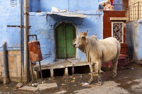 Inde-Delhi, Circuit Merveilles de l'Inde du Nord