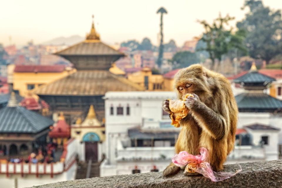 Circuit Du Taj Mahal à Katmandou Delhi Inde