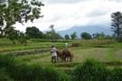 Indonésie Java & Bali