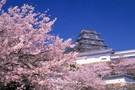 Japon Autrement