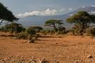 Féeries d'Afrique