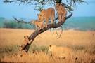 Jambo au pays de l'éléphant