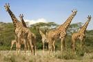 Kenya / Tanzanie