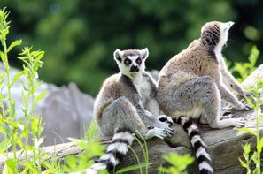 Madagascar-Tamatave, Combiné circuit et hôtel Splendeurs De Madagascar & Extension Ile Maurice
