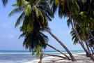 Splendeurs des Antilles