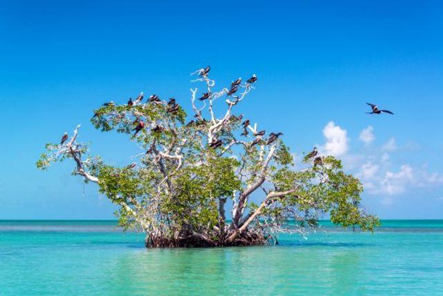 Mexique : Circuit Beautés Mayas et plage des Caraïbes