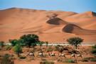 Visages de Namibie