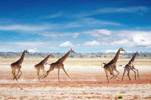 Etosha Génériques Circuit Impressions de Namibie Windhoek Namibie