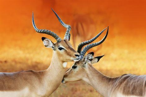Namibie-Windhoek, Circuit Couleurs de Namibie et Fish River Canyon 3*