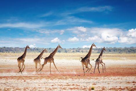 Pays Inconnus-Villes inconnues, Circuit Magie de l'Afrique du Sud, Chutes Victoria et Parc Chobe