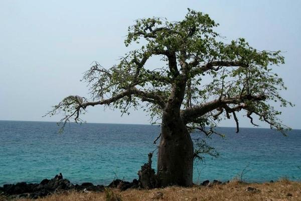Nature Circuit Saveurs et couleurs de Sao Tome Sao Tome Sao Tome