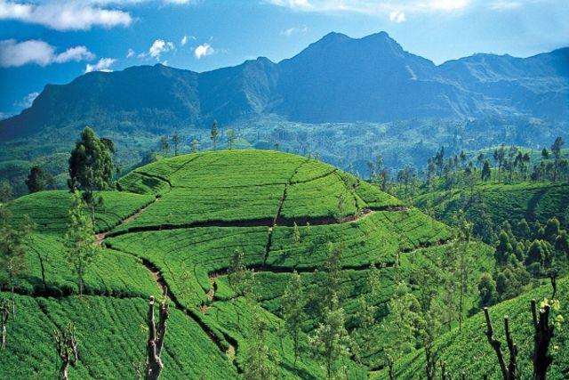 Sri Lanka : Circuit Sri Lanka : Ceylan, l'île d'émeraude