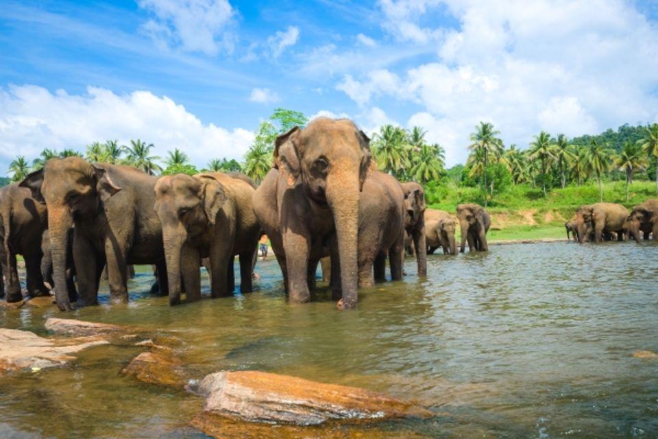 Combiné circuit et hôtel Sri Lanka Authentique 3* et Extension balnéaire Colombo Sri Lanka