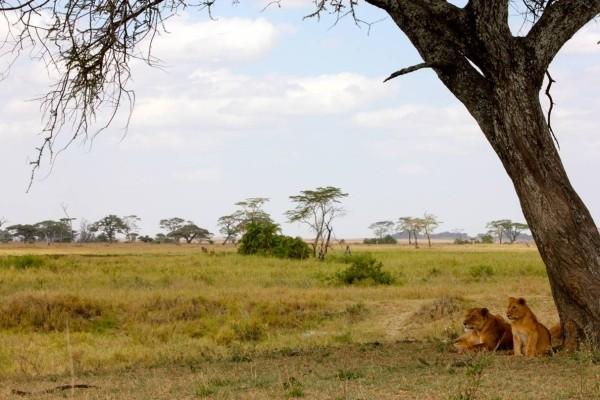 SPLENDEURS DE TANZANIE Circuit Splendeurs de Tanzanie Kilimanjaro Tanzanie