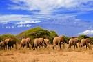 Safari Esprit de Tanzanie