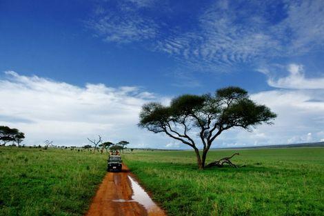 Zanzibar : Circuit Tarangire, Cratère du Ngorongoro et plages de Zanzibar