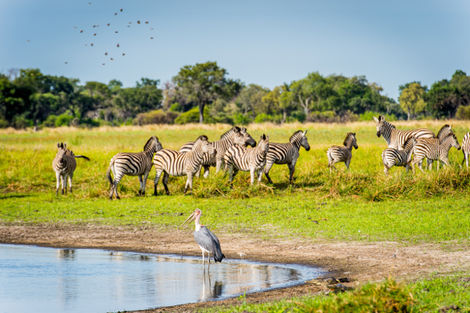 Zimbabwe-Victoria Falls, Circuit Impressions du Botswana